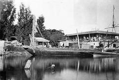 02_Ismailia - Crocodile Lake (usbpanasonic) Tags: canal redsea egypt portsaid mediterraneansea egypte  suez egyptians ismailia egyptiens crocodilelake