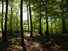 (X. Yang) Tags: trees nature f28 ep3 17mm skäralid sooc mzuiko