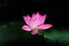 QB192A2809 (HL's Photo) Tags: lotus flower nature natural plant blooming 荷花 花 蓮花 botanical botanicalgarden redflower bloom flora flowers macro macroflower