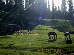 Biskeri Tatch-Himachal Pradesh-India (preetham09) Tags: trekking sony cybershot himalayas yhai h10