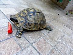 Schildpadje in hostel Split