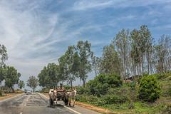 Indian Bullock Cart (Sharad Medhavi) Tags: road blue sky india tree green animal clouds bullock indian dramatic cart canoneos5dmarkiii sigma35mmf14dghsmart