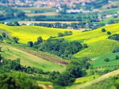 Italy, Marche, Recanati - countryside -by Gianni Del Bufalo CC BY 4.0
