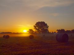 more haybales P7193951 (hlh 1960) Tags: morning trees summer sky sun mist sol nature misty sunrise landscape atardecer soleil colours nebel sommer natur harvest himmel summertime landschaft sonne sonnenaufgang haybale farben ernte germay heuballen heurollen