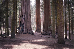 amerika (finnegan_eins) Tags: california usa sequoianationalpark fujisuperia200 40mm14 voigtlnderbessar3a