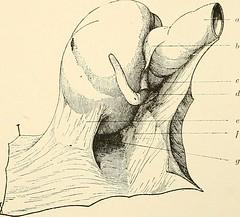 Anglų lietuvių žodynas. Žodis appendicular artery reiškia appendicular arterijų lietuviškai.