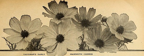 """Image from page 76 of """"Vaughan's seed store"""" (1918)"""