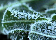 ANOTHER ICY WESTBROOK MORNING (16th man) Tags: winter ice canon eos frost australia qld queensland clover toowoomba drayton westbrook eos5dmkiii