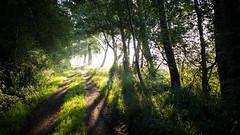 Weg im Nebel (EOSPhotographer) Tags: way weg