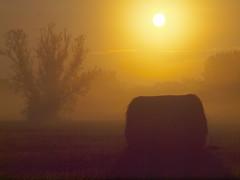 one hayball P7063662 (hlh 1960) Tags: light summer sun mist tree sol nature silhouette misty sunrise germany landscape golden soleil sommer natur landschaft sonne ernte harverst