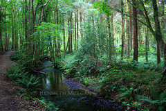 Tintern Woods (Ken Meegan) Tags: wood ireland woods tinternabbey cowexford saltmills tinternwoods