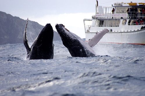 whale watching in Port Stephens by Traveloscopy, on Flickr