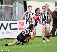 """IMG_8448 (Go to """"Albums"""" for all pics) Tags: club football collingwood dolphins pies magpies frankston vfl"""