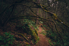 Home is where the moss is (Gabriel Tompkins) Tags: statepark park trees usa plant fern tree green nature floral leaves america forest outside outdoors washington leaf moss flora nikon moody peace shadows hiking path branches calming sigma peaceful wideangle calm hike foliage trail shade pacificnorthwest limbs dslr 1020mm washingtonstate lowkey footpath 1020 pnw ultrawide shady pathway issaquah 2010 diffuse kingcounty cougarmountain d90 sigma1020mmf456exdc nikond90 tronam gabrieltompkins tronamcom cougarmountainregionalwildla