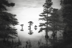 Three little brothers (Eduard Moldoveanu Photography) Tags: lrthefader lakemattamuskeet northcarolina outerbanks tree usa alone art background beautiful black calm clouds exposure fine fineart horizon lake landscape lone lonely long monochrome morning mountain moving natural nature new outdoor outdoors pastoral peace peaceful photography photos pinhole poetic reflection scene scenery scenic sea serene silhouette single sky solitude southeast summer toned tranquil tranquility travel vacation water waterscape white fairfield nc