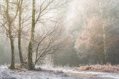 Pathways (Vemsteroo) Tags: beautiful birmingham equine forest frost horses lrthefader lake landscape nature ponies suttonpark trees westmidlands winter woodland cold frozen hoarfrost iceland park parklands morning sunrise xt2 xseries