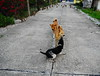,, I Walk the Line ,, (Jon in Thailand) Tags: legs mama rocky monkeys primates onenun jungle road cementroad queenofthejungle subject royality nikon d300 nikkor 175528 bodyguard servent dog k9 k9s 3dogs dogs streetphotographyjunglestyle littledoglaughedstories
