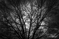 """TREE"" (buddah610) Tags: nature storm clouds nikond3300 tree blackandwhite nationalgeographic trending flickrunited"