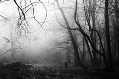 A walk into your darkest dreams (SimonLea2012) Tags: adventure walk unseen shadows emotion dread fog mist contrast trees woodland wander path dreams nightmares forest woods mono atmosphere