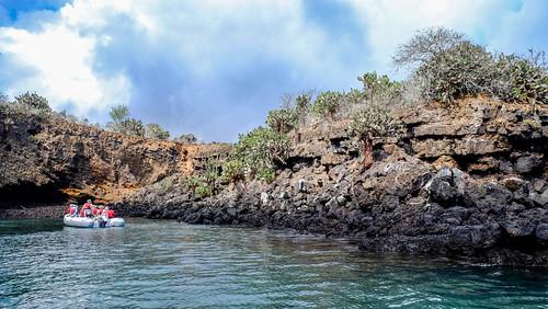 Champion, Galapagos