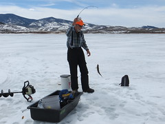 Dave Pulling A Lake Trout Through The Hole (fethers1) Tags: icefishing fishing williamsforkreservoir laketrout