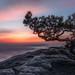 sunrise at lilienstein (christian.denger) Tags: sachsen sächsischeschweiz elbsandsteingebirge sonnenaufgang germany travel wetterkiefer lee filters sandstein deutschland sunrise