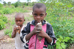 Young boys eats fresh cassava root, Mkuranga district, Tanzania. Photo H.Holmes/RTB