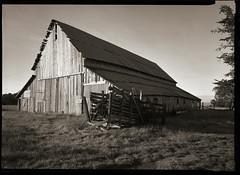 mendocino barn (stormiticus) Tags: lf 5x7 canham kodak txp xtol mendocino barn ektar 812 commercial 320txp film bw analog blackandwhite