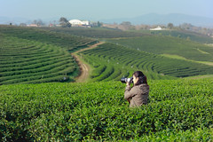 Tea plantation (Krunja) Tags: background beautiful black blue camera countryside cultivation digital farm farmland female filed girl grass green hobby holiday landscape meadow natural nature outdoor people person photo photograph photographer photography picture plant plantation professional shoot sky summer take taking tea terrace travel view woman women young tambonsikham changwatchiangrai thailand th