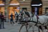 Viennese horse (Steve_McCaul) Tags: beginnerdigitalphotographychallengewinner