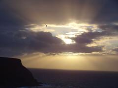 DSC01265 (Saf37y) Tags: gamriebay gardenstown mhorhead morayfirth sunset seashore sea coast clouds stormy day endoftheday seagull seaside