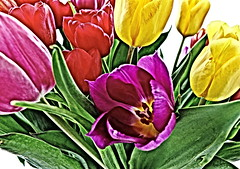 Expressionism (louise peters) Tags: tulips tulpen spring lente boeket bunch colorful colourful kleurrijk exaggeration overdreven expressionism expressionisme macro makro