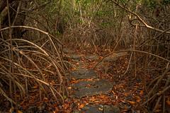 Tulum CESIAK org national park cenote mangroves-2