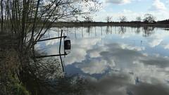 visvoeding in de wijer (erix!) Tags: zonhoven vlaanderen flandern natuurlijk natuur nature water fluid lakes