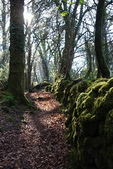 Seeing the light on a wrong turn! (Karen Warren1) Tags: sunlight wall stonewall moss dartmoor trees path leaves walk1000miles2017 walk1000miles worldinneedwalkersimplesitecom woodland boveywoods treesdiestandingup