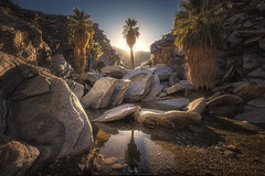 Palm Canyon - Palm Springs, CA (wesome) Tags: adamattoun palmsprings palmcanyon coachellavalley