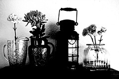 Experimental (sarahellenspringer) Tags: experiment flowers carnation lantern 7dwfbw