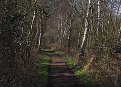 potteric carr pathway (Johnson Cameraface) Tags: 2017 march spring olympus omde1 em1 micro43 zd zuiko macro 50mm f2 johnsoncameraface pottericcarrnaturereserve pottericcarr path walking footpath yorkshirewildlifetrust naturereserve ywt trees
