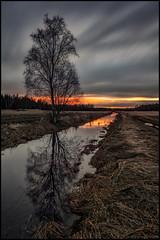Granholmsbäcken (Jonas Thomén) Tags: bäck creek field åker clouds moln longexposure långexponering 4min grass gräs sunset solnedgång träd tree reflection spegling vatten water night natt kväll