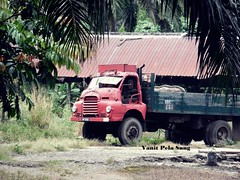 Forgotten Bedford (vanitpelasung) Tags: lorry bedford abandoned old estate rusty penang malaysia