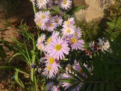 IMG_1899 (The Artistic Vikas) Tags: flower pink hd iphone blur crispy
