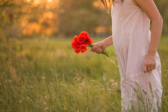 Picking up poppies (Nathalie Le Bris) Tags: poppies sunset backlight hand mano contraluz amanecer amapola coquelicot main contrejour