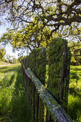 Mossy Fence (PeglegSJ) Tags: california cali canon canont3i hollister santaana san benito