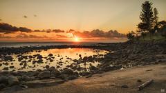 Just another Burleigh sunrise (BAN - photography) Tags: rocks pool sea ocean trees park norfolkpines burleighheads longexposure sandshellsbeachfront shore driftwood d810 pandanustrees grass