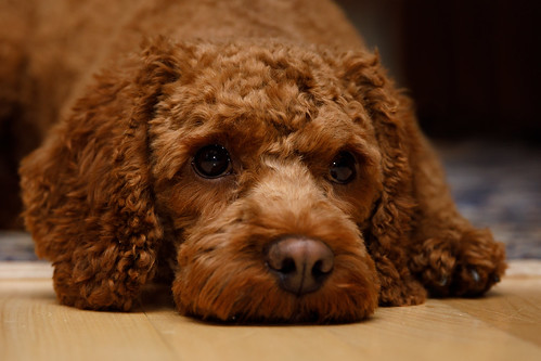 Cute dog: Relax