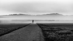 runner (schneider-lein) Tags: inexplore carlzeiss fe5518za mono monochrome monotone balckwhite schwarzweiss natur nature landscape foggy misty hazy smoky fog runner morningrun jogger pfäffikon schweiz switzerland suisse swiss svizzera suiza