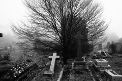 The Tree of Rest (JamieHaugh) Tags: bath lansdown somerset england beckford sony a6000 outdoors graves cemetery graveyard mist fog trees blackwhite blackandwhite bw monochrome landscape rest