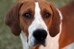 RIP Scott (crafty1tutu (Ann)) Tags: travel holiday 2016 southafrica africa animal dog rip friend sad