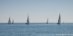 Club Nàutic L'Escala - Puerto deportivo Costa Brava-2 (nauticescala) Tags: comodor creuer crucero costabrava navegar regata regatas lescalagde velesdempuries feva làser optimist velaadaptada velaligera velalleugera