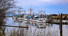 History of Scotch Pond (Christie : Colour & Light Collection) Tags: steveston fishing fishingvillage scotchpond richmond slough poind scottishcanadiancannery garrypointpark fishingboats fishboat fishingboat channel bc canada
